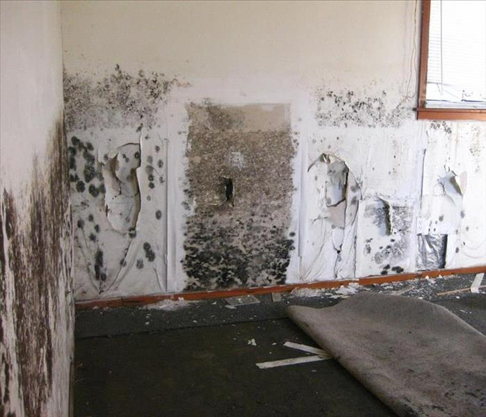 Mold Remediation Common Types of Mold in your Home